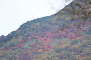 紅葉始まってた